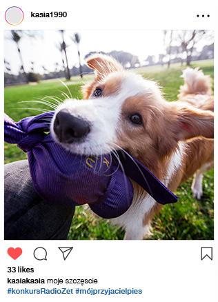 przyjaciel-pies-1